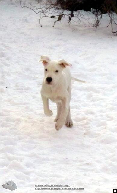 Ein weißer Hund in weißem Schnee sieht gar nicht mehr so weiß aus.