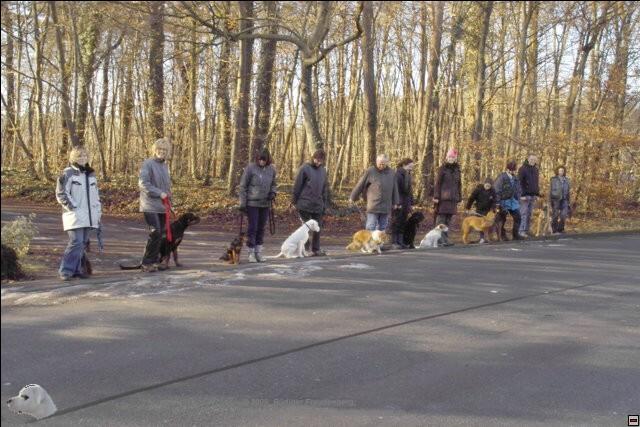 Training im und am Wald