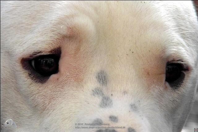 Dänemark Hundegesetz 2021