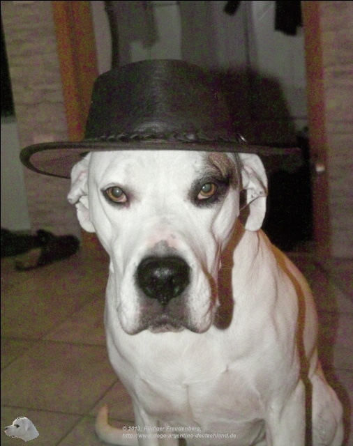 Mailo als Humphrey Bogart