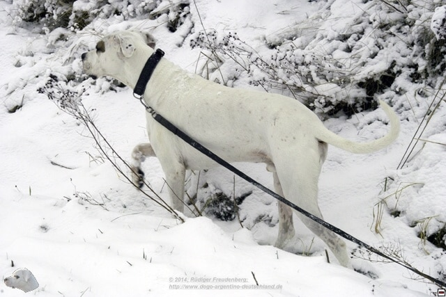 Mailo im Schnee